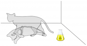 adapted from en.wikipedia.org/wiki/Schrödinger's_cat
